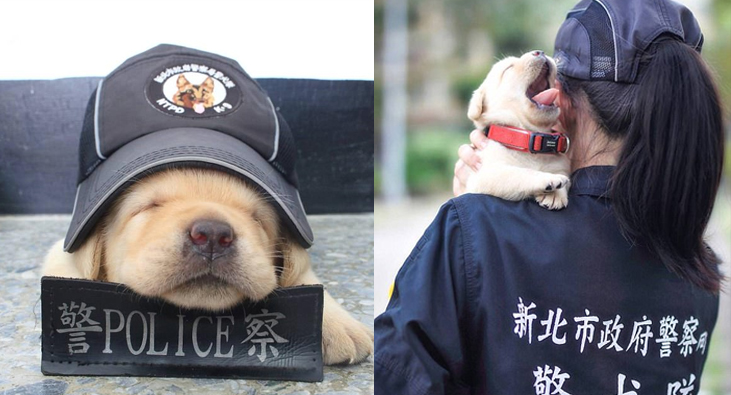 Chatty Buddha Chatty Buddha - The internet cant get enough of the taiwan police forces newest k9 recruits