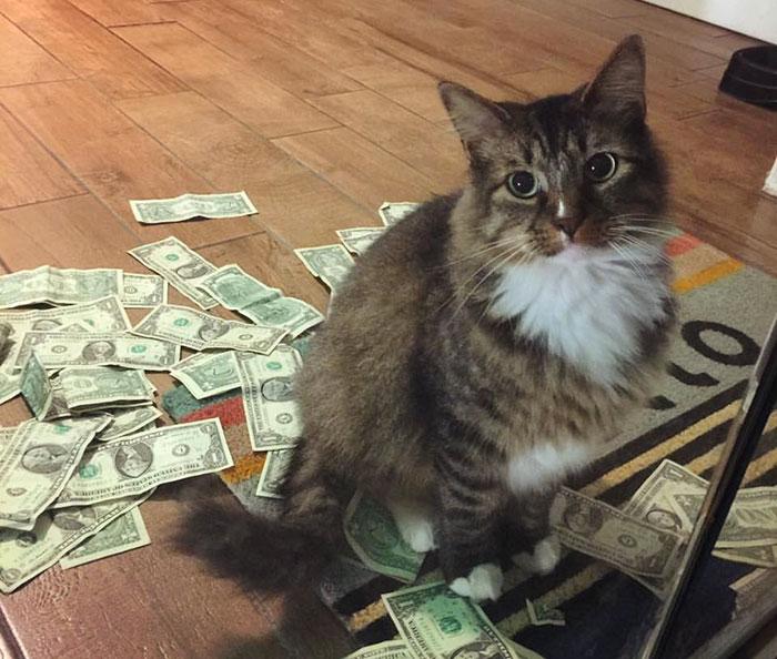 fine grain cat litter